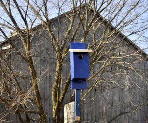 bluebird house on a post