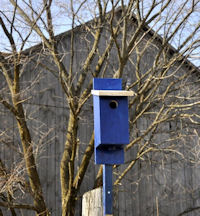 finished bluebird house and barn