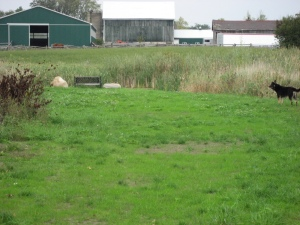 pond area where Hemi was living