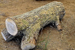What's under the bark?